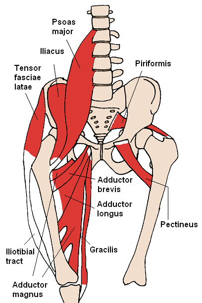 /storage/app/media/Anterior_Hip_Muscles_2.png